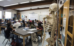 Course Review: Anatomy and Physiology Macro