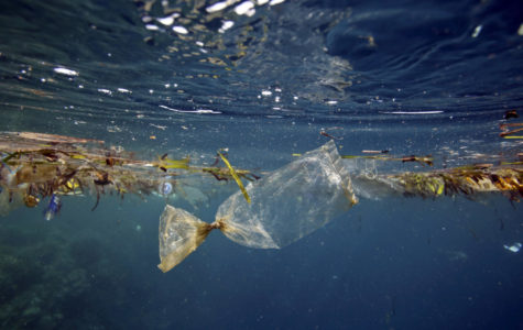 Are The World's Oceans Getting Any Cleaner?