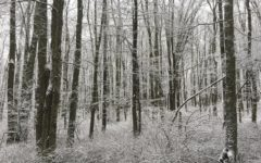 Winter Forest Lullaby: A Short Story